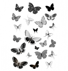 set of black butterflies vector image