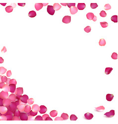 Banner of pink rose petals vector