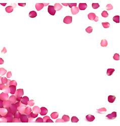 Banner pink rose petals vector
