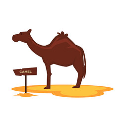 Camel zoo animal and wooden signboard vector