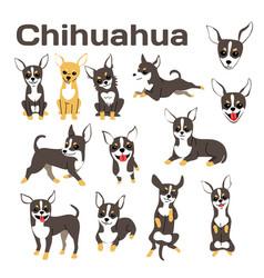 Chihuahua vector