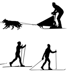Cross country skiers sled and team of dogs vector