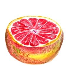 half of grapefruit vector image