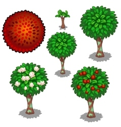 Planting and cultivation of red exotic rambutan vector image