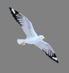 Realistic bird seagull isolated on a grey vector