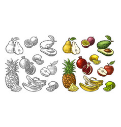 set fruits pineapple lime banana pomegranate vector image