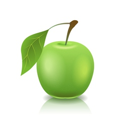 green ripe apple vector image vector image
