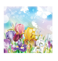 Background with Iris flowers vector