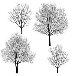 Collection silhouettes trees without leaves vector