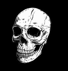 hand drawn human skull on dark background design vector image