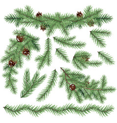 set realistic fir branches isolated on white vector image