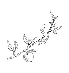 tree branch with leaves and apple vector image
