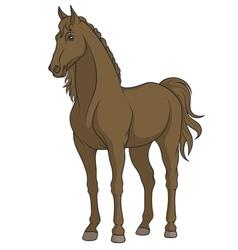 Color of a horse vector