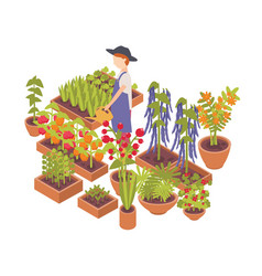 Male farmer watering vegetables and flowers vector