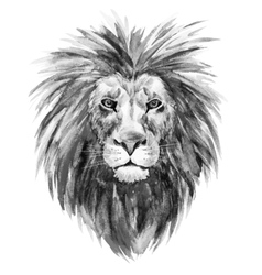 Watercolor lion vector image