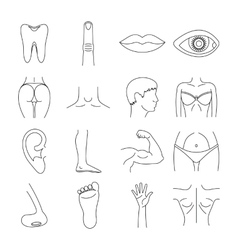 Body parts icons set outline style vector image vector image