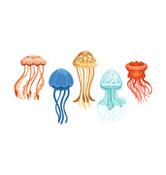 Jellyfish collection beautiful swimming marine vector
