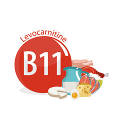 Vitamin b11 levocarnitine vector