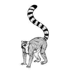 hand drawn lemur sketch vector image