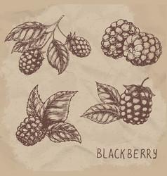 set of drawing blackberry raspberry vector image vector image