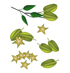 A Set of Delicious Fresh Green Carambolas vector image
