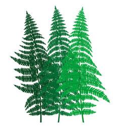 green fern background vector image vector image