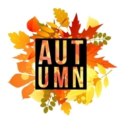 autumn banner for your design vector image