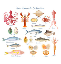Big set with sea creatures isolated on white vector