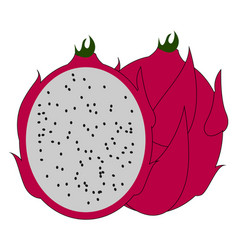 Red pitahaya on white background vector