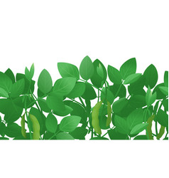 soybean plant green background vector image