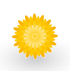 yellow flower of dandelion vector image