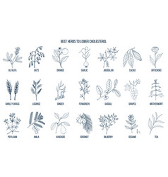 collection of best herbs for lower cholesterol vector image