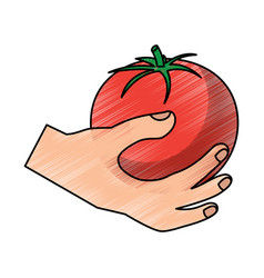 hand holding tomato vegetable food health vector image