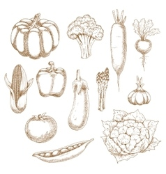 Retro stylized sketches of ripe vegetables vector image