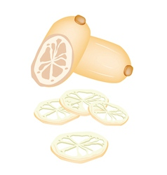 Sliced of Lotus Root on White Background vector image
