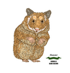 hand drawn hamster colored sketch animal on white vector image