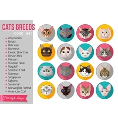 Set of flat popular breeds of cats icons vector image
