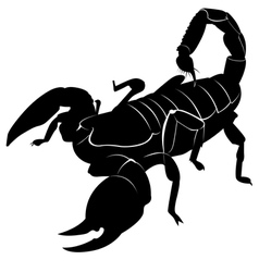 Silhouette of a scorpion vector image vector image