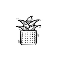 mother-in-law tongue plant hand drawn sketch icon vector image vector image