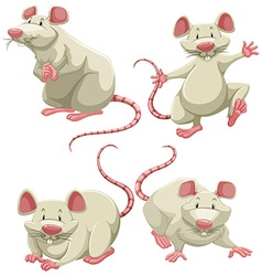 White mice vector image vector image