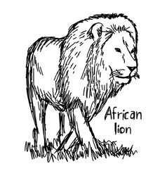 african lion walking - sketch hand vector image