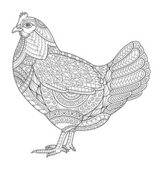 chicken zentangle stylized for coloring book vector image