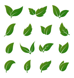 green leaf icons spring leaves ecology vector image