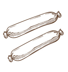 Gut sausages or frankfurters isolated sketch meat vector