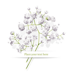 Little white flowers bouquet vector