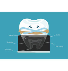 Root canal dental vector image