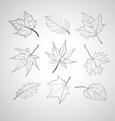 Leaves outline vector image vector image