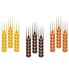 Colorful wheat ears vector