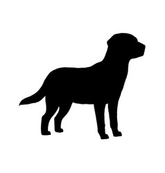 dog labrador silhouette black white icon vector image