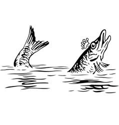 King fish vector image